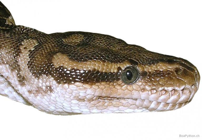 Python Tutor